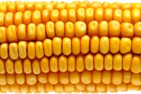 OGM : pourquoi le Parlement Européen devait agir?