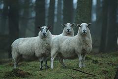 Protéger les consommateurs : mon vote contre le clonage à des finsagricoles